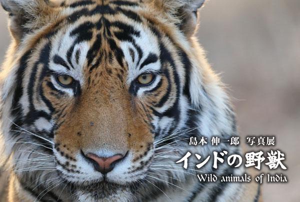 島本 伸一郎 写真展『インドの野獣』 イメージ